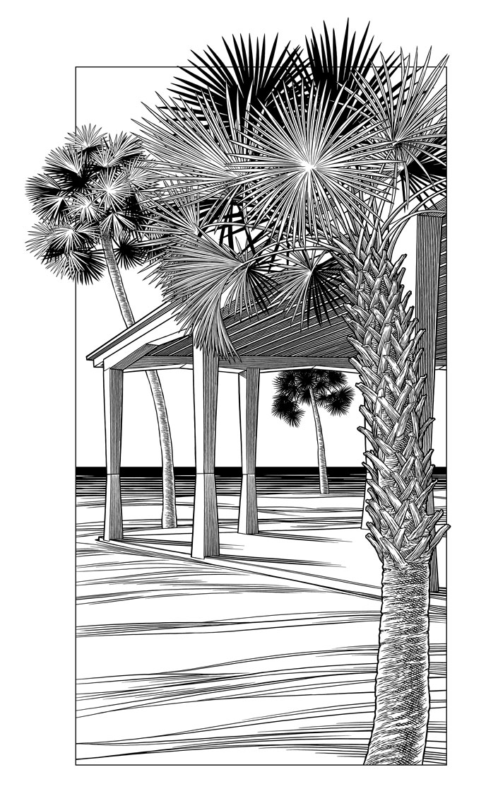Keith Ward line illustration of palms for Sarasota Visitor Center pavillion